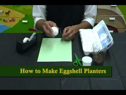Crafty Creations 28: Earth Day Crafts - DVD Frogs & Eggshell Planters