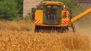 Żniwa 2017- Pszenica | New Holland tc 5040 , t6020 , td 5010 | Pronar T672  -  wheat Harvester