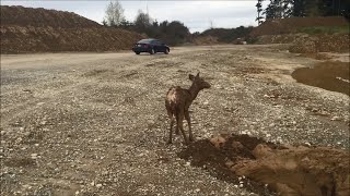 Excavator Mounts Heroic Rescue of Young Deer Trapped in Mud (Storyful, Crazy)