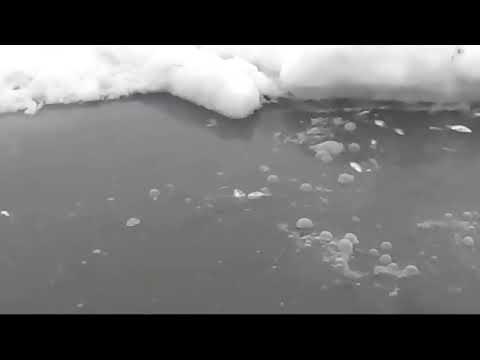 Экологическая Катастрофа г. Макушино Курганская обл. №4