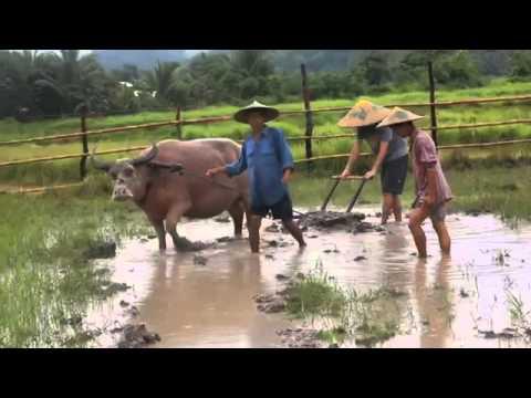 living land Laos