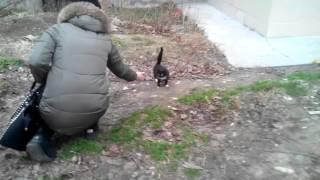 Котёнку срочно нужен новый дом или передержка!!!