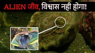 दुनिया के 5 सबसे खतरनाक जानवर | 5 most Deadliest Animals In The World | #alien #top5animal #deadliea