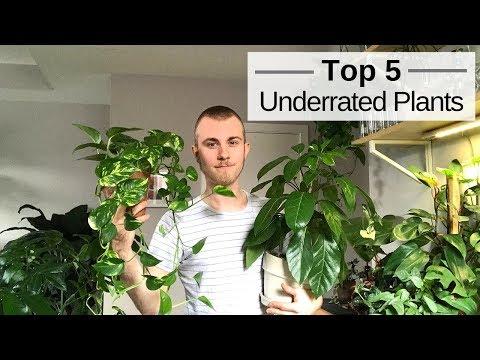 Top 5 Underrated Houseplants
