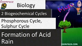 2 Biogeochemical Cycles: Phosphorous Cycle, Sulphur Cycle & Formation of Acid Rain