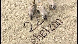 Животные празднуют день рождения челябинского зоопарка