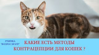 27.04.18 Контрацепция кошек без проведения стерилизации
