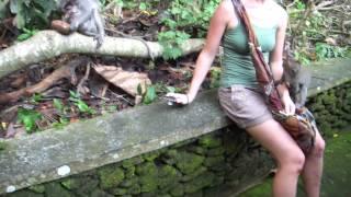 monkey forest has some mean monkeys bali 2010