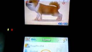 Nintendogs-how To Get Your Dogs To Breed