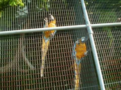 The Hamilton Aviary Http://ontarioalive.com/are-you-a-friend-of-the-aviary/