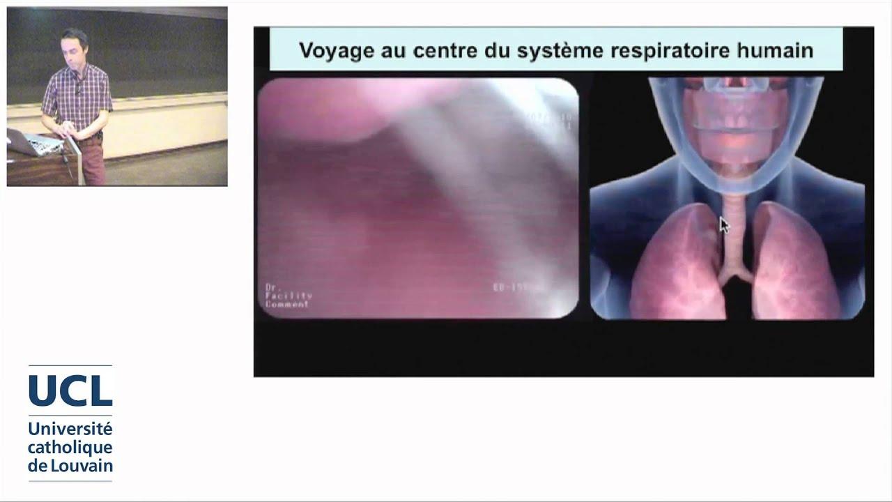 2. L\'anatomie respiratoire: de la bouche aux alvéoles pulmonaires ...