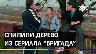 В Москве спилили дерево из сериала «Бригада»