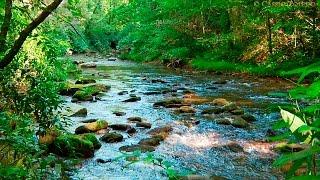Sonidos del Bosque - Relajarse - Sonidos de la Naturaleza thumbnail