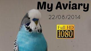 My Budgie Aviary
