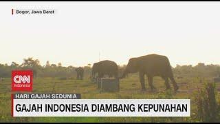 Gajah Indonesia Diambang Kepunahan