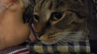 Emma Plays With Mittens (Unplanned Video)