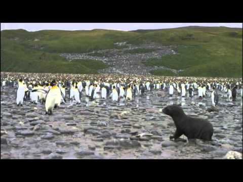 Antarctica Tourism ¦ Antarctica Tours ¦ Travel To Antarctica ¦ Antarctic Cruise ¦ Antarctica Travel