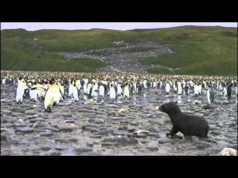 Antarctica Tourism ¦ Antarctica Tours ¦ Travel To Antarctica ¦ Antarctic Cruise ¦ Antarctica Travel