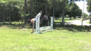 AQHA Hunter Prospect For Sale - Central Florida