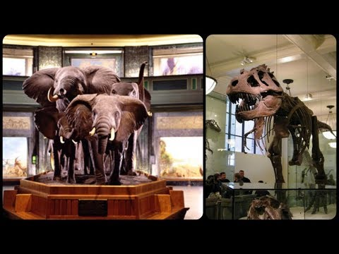 Natural History Museum New York City 2017