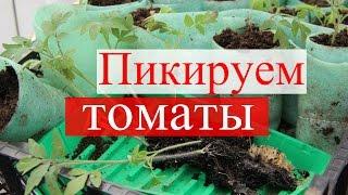 Пикируем томаты в стаканчики.(09.04.16)(Вот и настало время пикировки рассады томатов. В этом видео я поделюсь своим опытом пикировки рассады томат..., 2016-04-11T16:31:17.000Z)