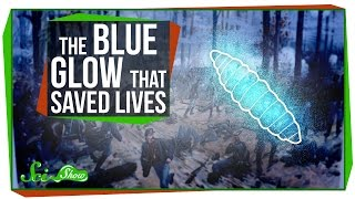 The Strange Blue Glow That Saved Lives