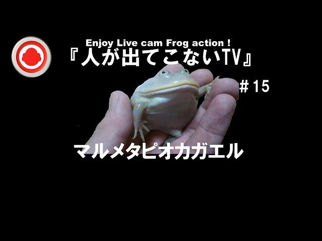 #15『人が出てこないTV』3/18㈭生配信マルメタピオカガエル