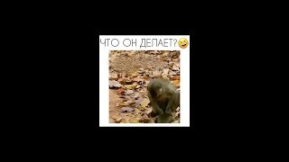 Best funnny moments Russia 2018 #3. Try not laugh! | Лучшие смешные моменты России 2018 #3
