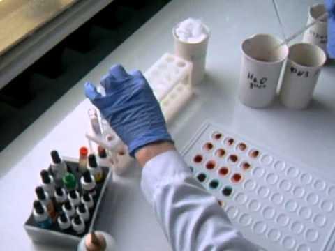 определение групп крови перекрёстным методом и резус-фактора - YouTube