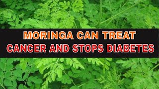 MORINGA, CAN TREAT CANCER AND STOPS DIABETES