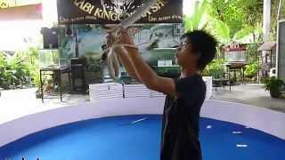 Шоу со змеями в Ао Нанге. Ao Nang King Cobra show