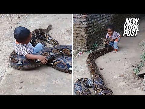 Jimmy Elliott - VIRAL VIDEO: Toddler Manhandles Python Outside His Home