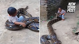 Toddler manhandles python outside his home