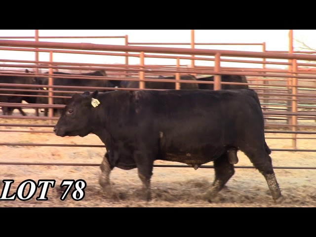 Mead Angus Farms Lot 78