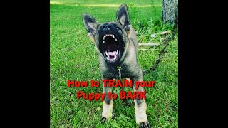 How to train your puppy to BARK and when to do it