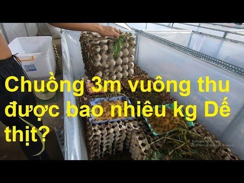Chuồng 3m vuông nuôi Dế được bao nhiêu kg Dế thịt?