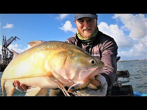 Brisbane River Threadfin Salmon