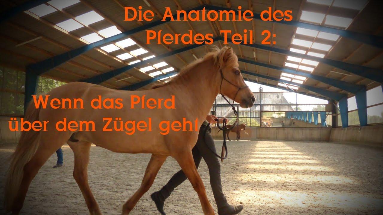 Die Anatomie des Pferdes Teil 2: Wenn das Pferd über dem Zügel geht ...
