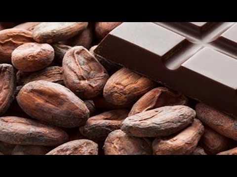 diferencia del chocolate y la cocoa