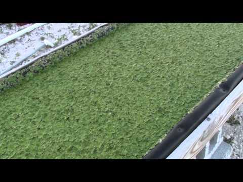 Cape Eleuthera Island School hydroponic bed