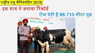 Successful Dairy Farmer: Punjab Man's Cow Sets Record With More Than 66 Kg Milk in a Day