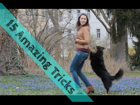 15 Amazing Dog Tricks