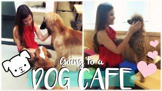 Visiting a Dog Cafe in Seoul, Korea Travel Vlog   The Travel Breakdown