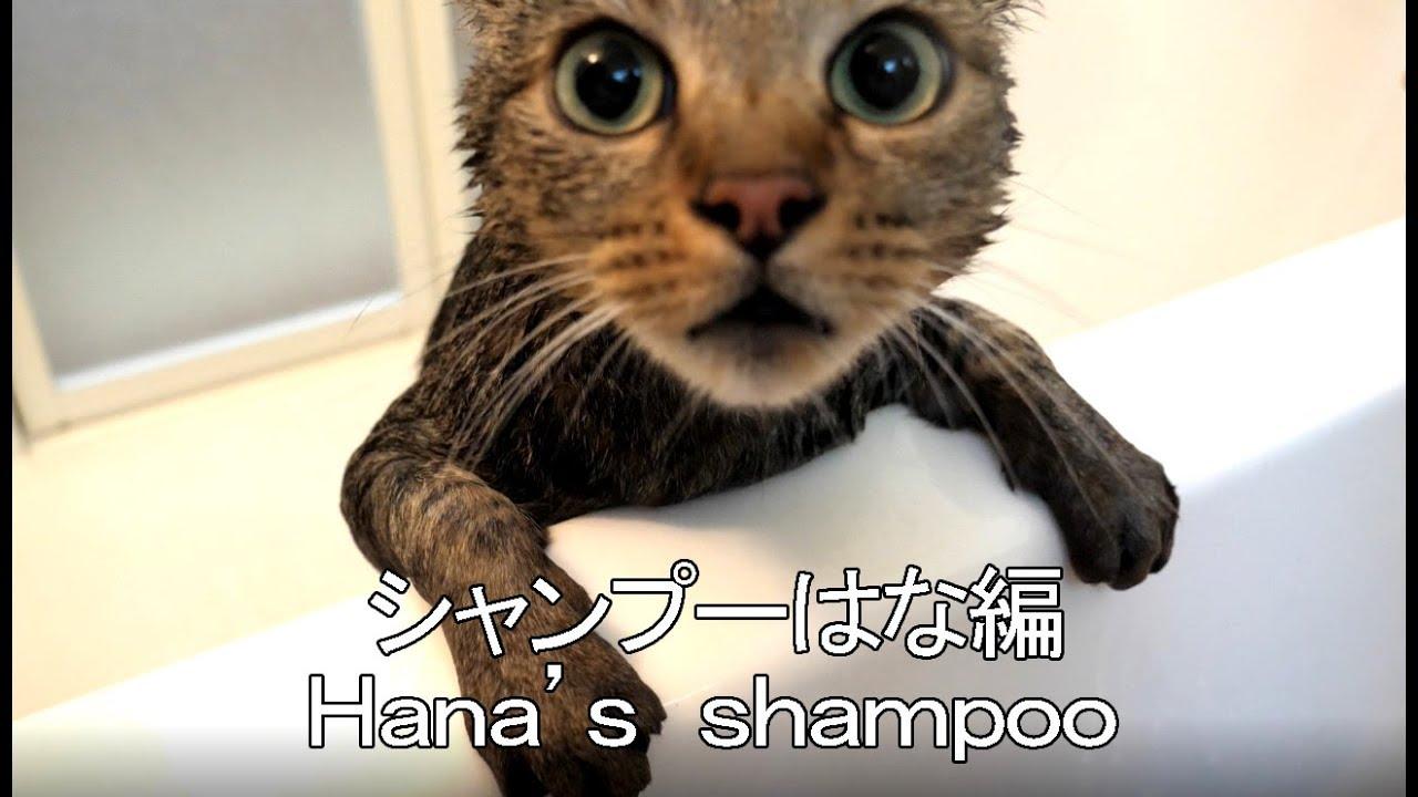 シャンプーされるはな-hana-s-shampoo