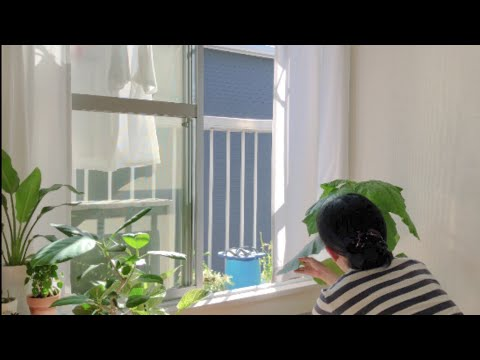 plant tour 🌱 | houseplants in our japanese apartment