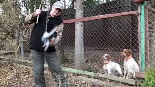 Как отучить собаку бояться выстрела.