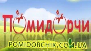 Семена Огурцов Конкурент - Помидорчик