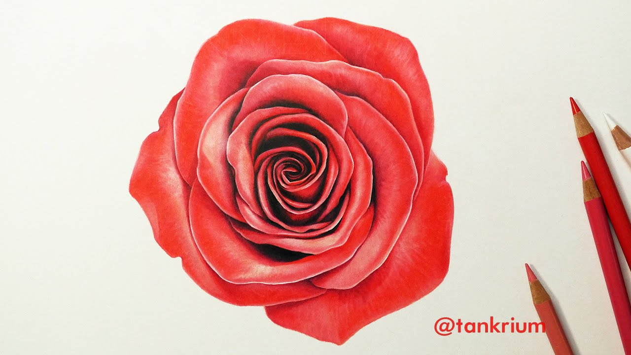 DRAWING A ROSE (How To Draw A Realistic Rose) Time Lapse ...