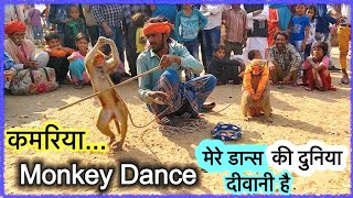 मेरे जैसा नाच कहाँ ... bandar bandariya ka khel.. funniest monkey drama..
