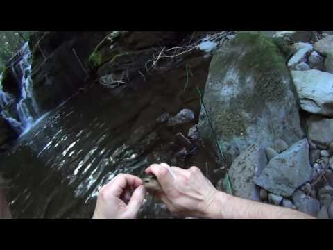 Pond Eddy Creek , Delaware River Tributary, Map Link Below